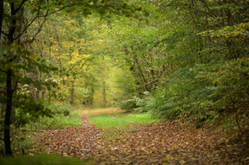 Entschleunigen Wald