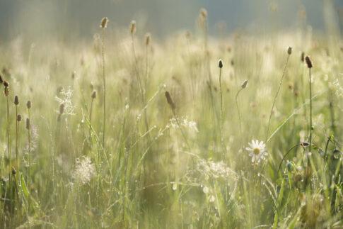 Entschleunigen Lahnwiesen